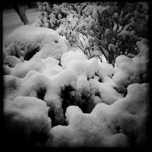 winter1WEB