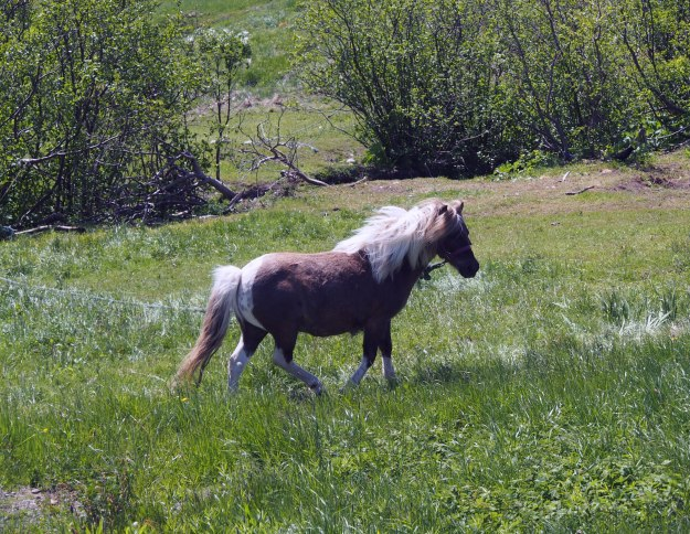 This pony lives just down from the house; he seemed glad to see us come by on the way back from the water
