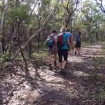 Bobbin Head loop - on the Murrua Track