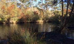 Deep Creek to Bahai Temple walk: the creek at the start
