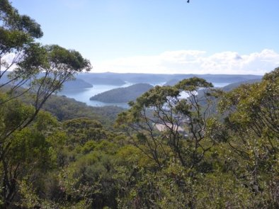 Hawkesbury view, Spring flowers at Muogamarra Nature Reserve