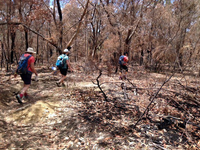 Red Hill rogaining en route to checkpoint 90