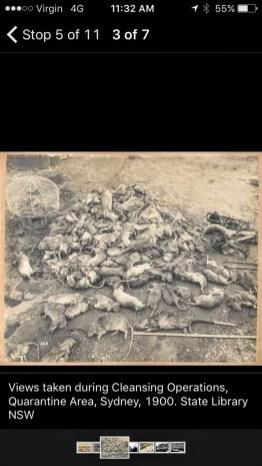 The Road to Barangaroo App - Plague Rats
