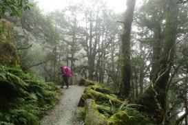 Mossy beech forest