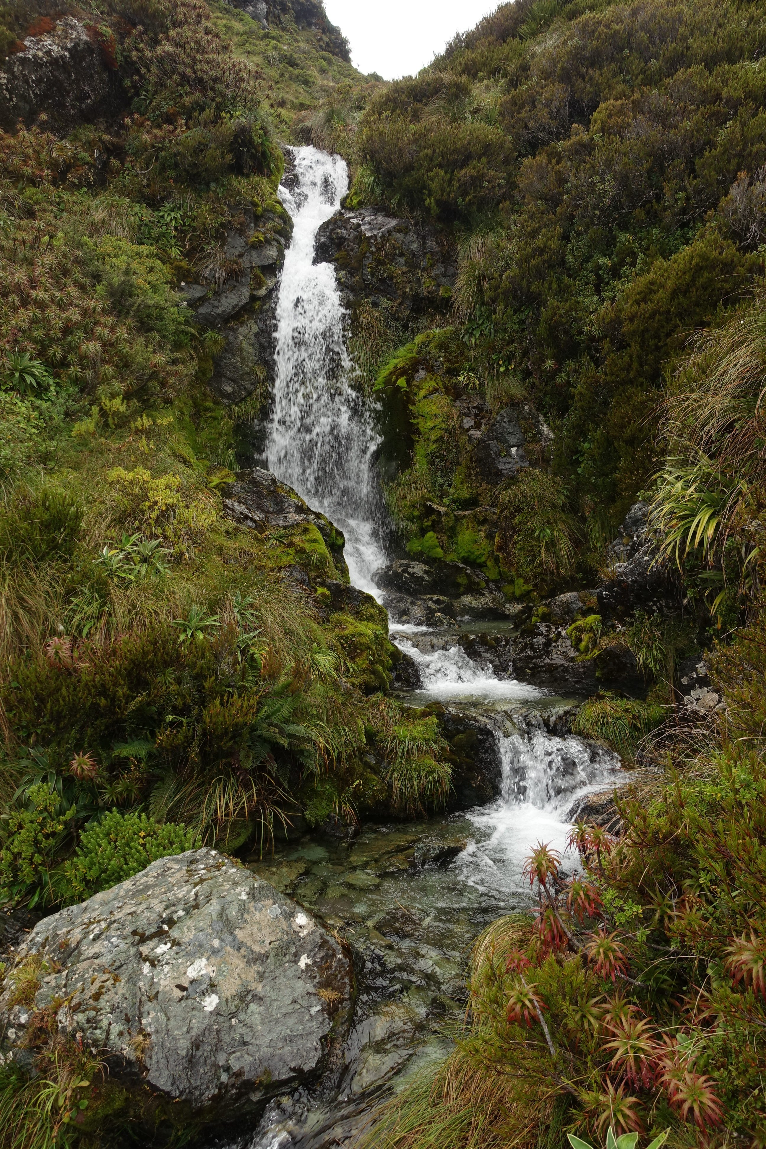 Another stream on the Routeburn