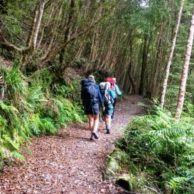 Heaphy Track Beech Forest