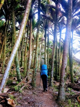 Heaphy Track Palm Forest