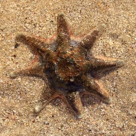 SOPC Starfish