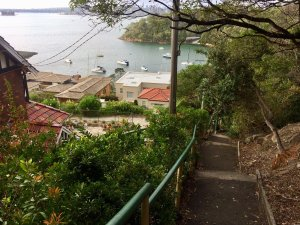 Taylors Bay Stairs View - 147