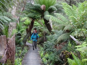 Boardwalk through Sealers Swamp, Wilsons Prom