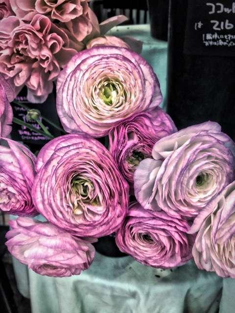 Sydney Solis Japan flowers