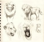 LionSketches3055