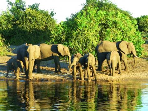 Elefanter er noen flotte, majestetiske og stilige dyr!