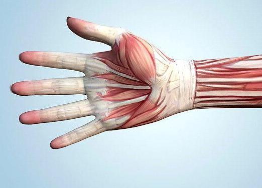 hogyan lehet fejleszteni a könyökízületet sérülés után)