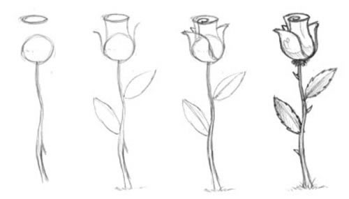 تعلم رسم وردة بقلم رصاص على مراحل كيفية رسم برعم الورد بشكل جميل