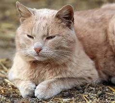 Как узнать что кошка беременная: советы начинающим кошколюбителям. Признаки-подсказки или как понять, что кошка беременная