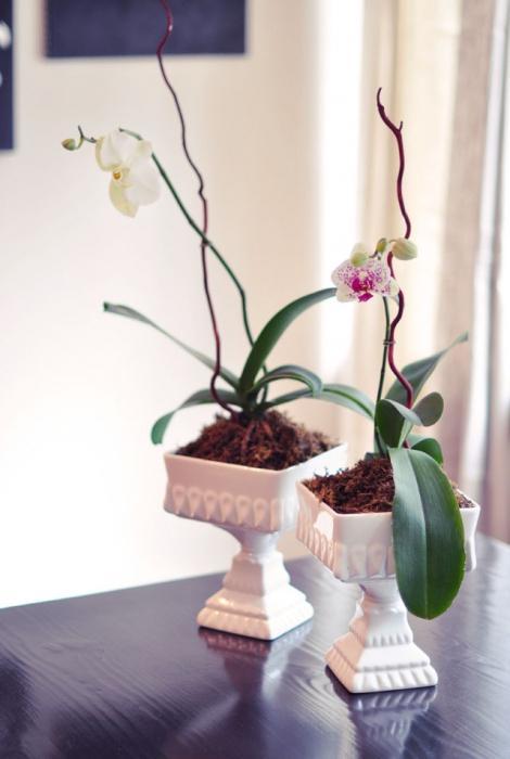 Почему у орхидеи вянут цветы и бутоны? Обзор причин, советы по решению проблемы. Причины, почему у фаленопсиса опадают бутоны и что делать? Осыпаются цветки орхидеи