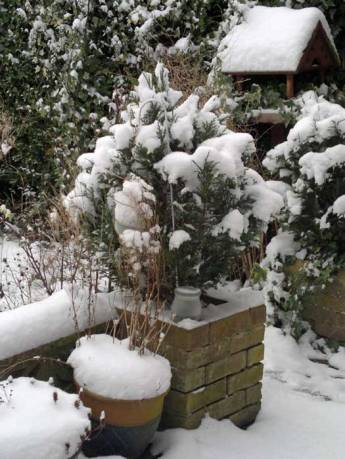 my garden in the snow