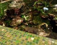tiled-pond