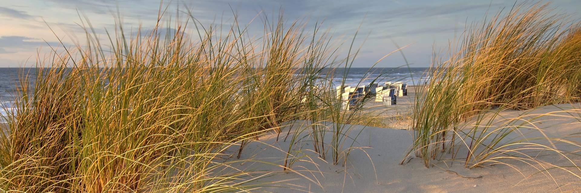 wandbild strand
