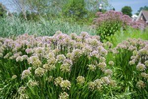 pollinator-garden-sylvan-gardens
