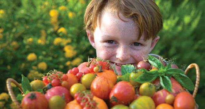boy-tomatoes