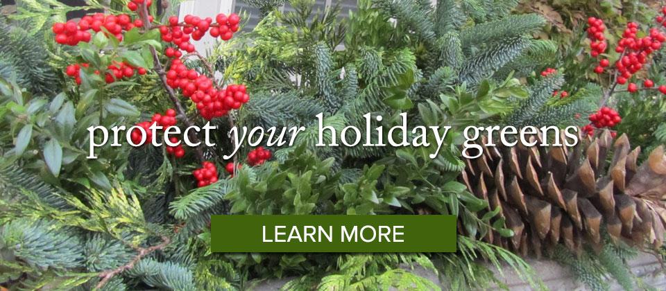 holidaygreens_learnmore