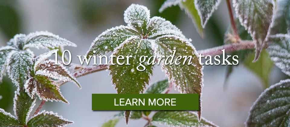 wintergarden_learnmore-1