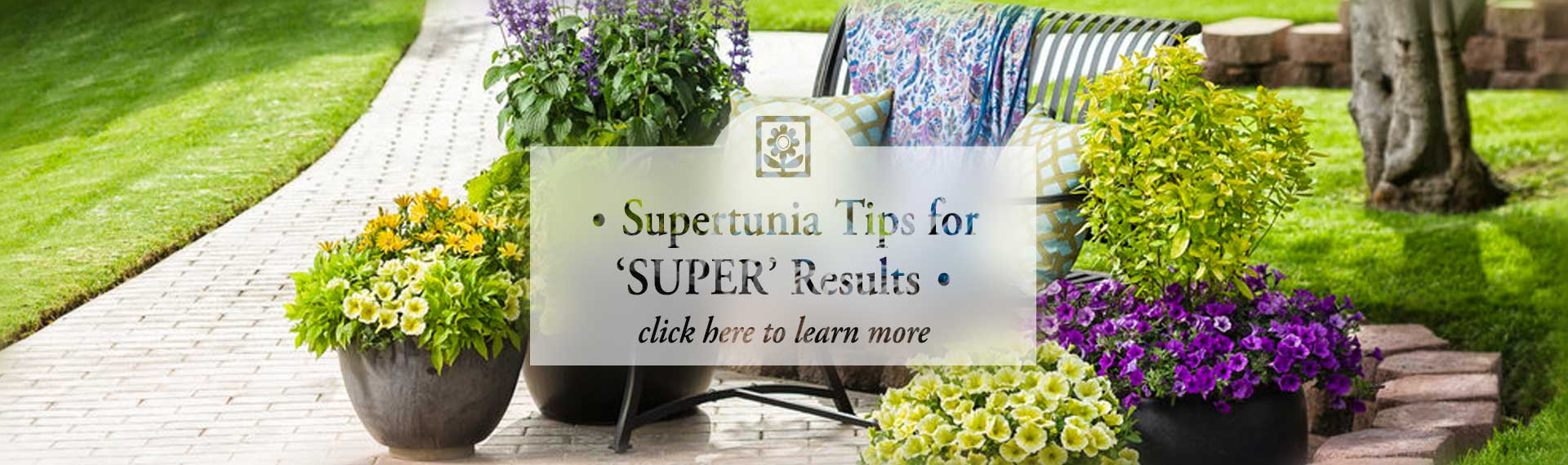 supertunia_FROSTED