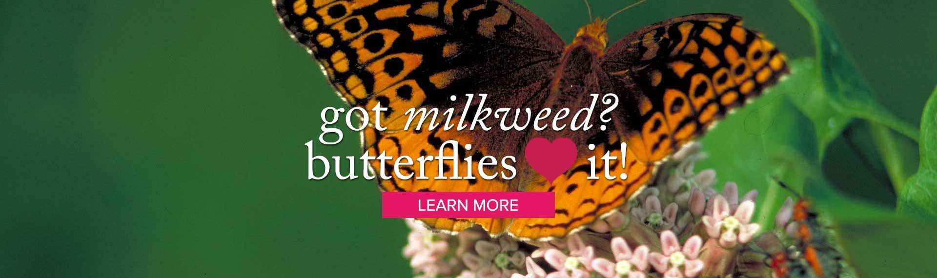 milkweed_LEARN