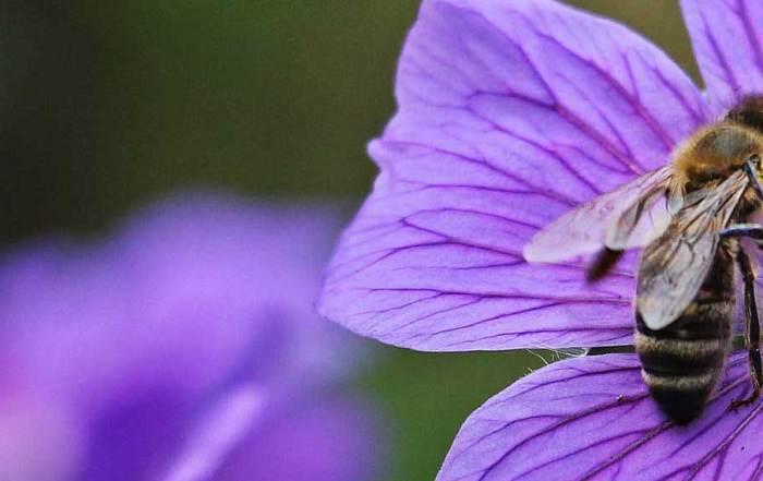pollinator_BLANK