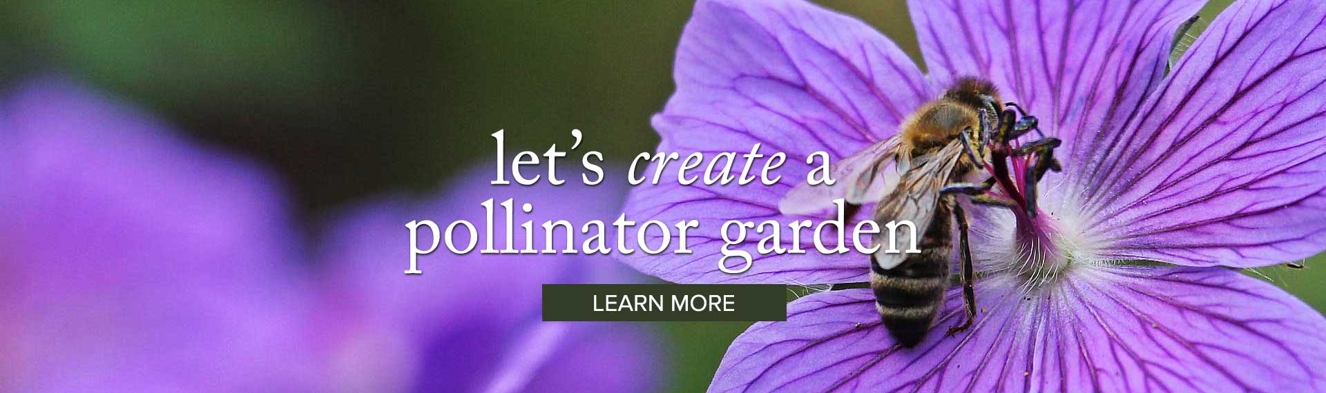 pollinator_LEARN