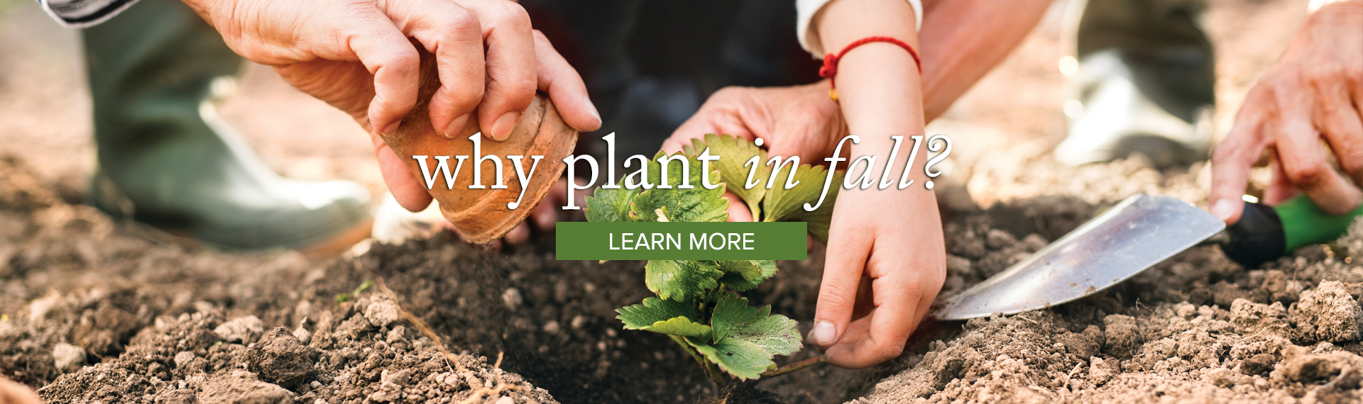 plant_LEARN
