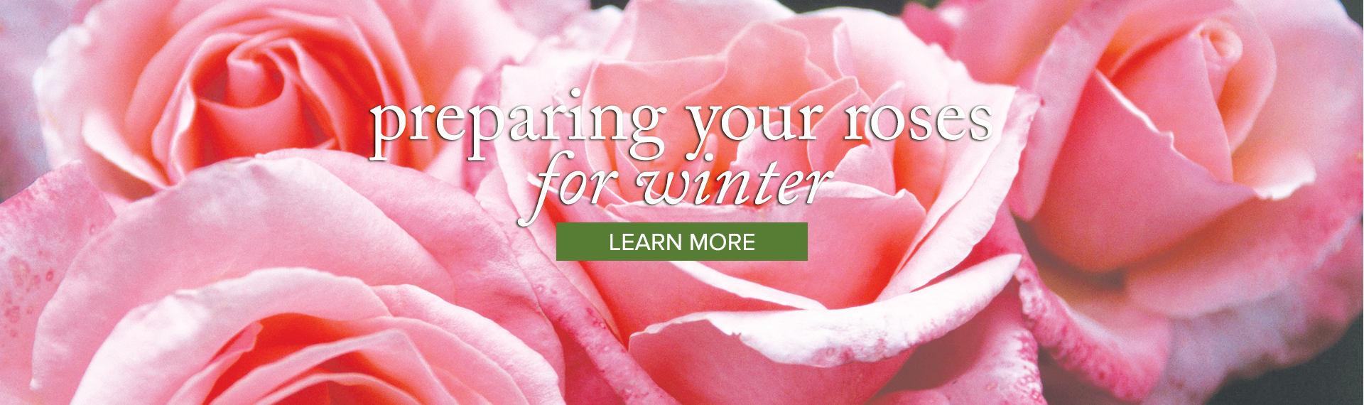 roses_LEARN