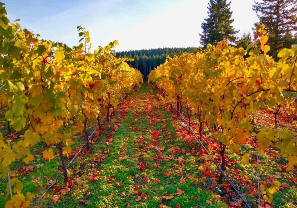 Fall rows.