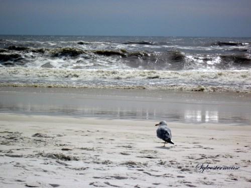 Seagull Serenity