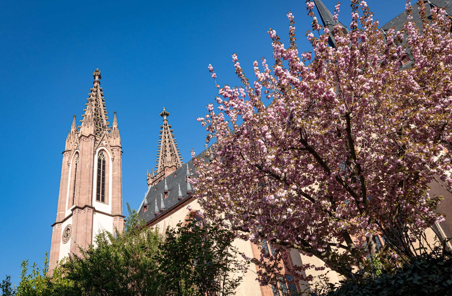 Rheingau-Dom-Geisenheim im Frühling