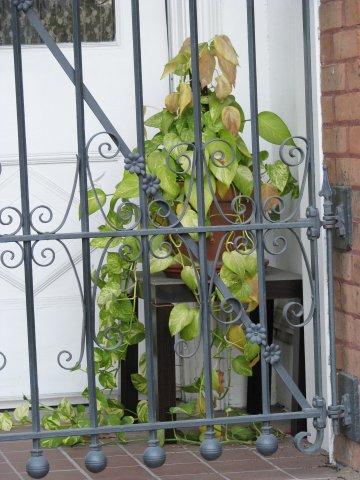 ivy in the doorway