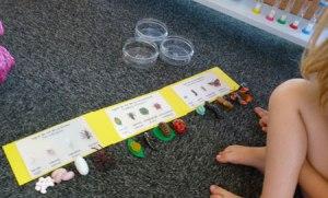 Montessori sciences