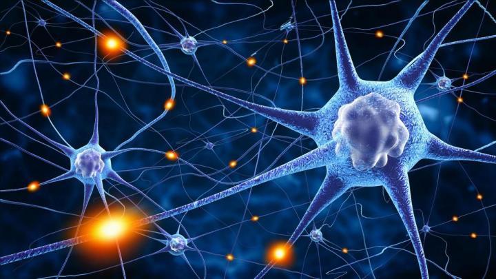Une nouvelle formation sur les neurosciences et éducation