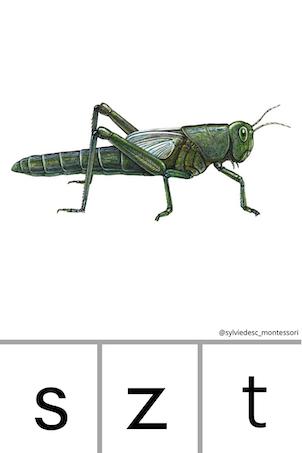 Cartes pour apprendre à lire avec des insectes