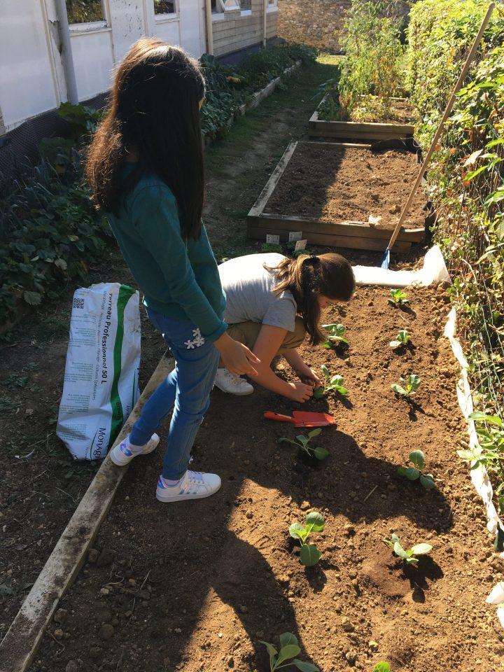 Les activités de jardinage à l'école