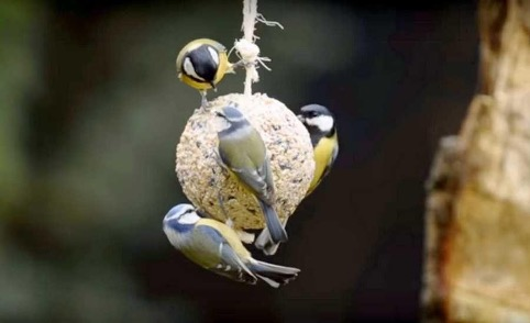 La meilleure saison pour observer les oiseaux