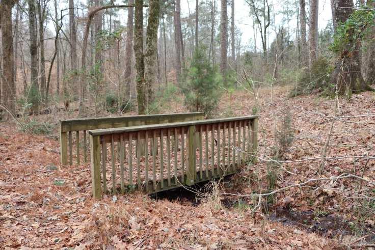 Lynch's Woods