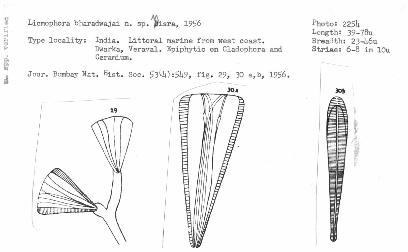 hight resolution of systematic account of some littoral marine diatoms from the west coast of india the journal of the bombay natural history society 53 4 537 568