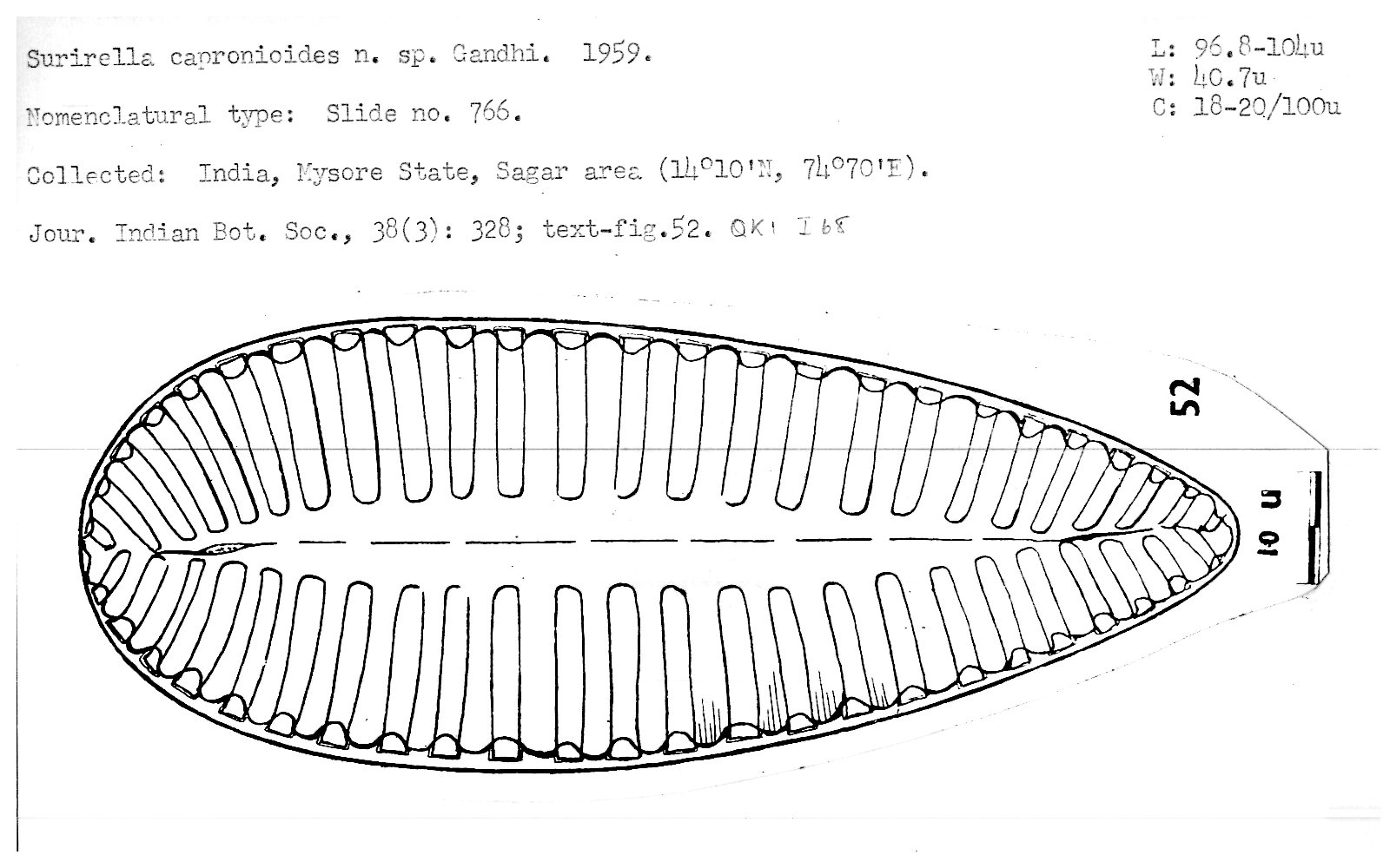 hight resolution of fresh water diatoms from sagar in the mysore state journal of the indian botanical society 38 3 305 331