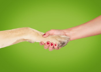brand identity - woman shaking hands with dog