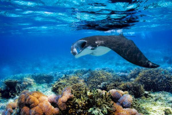 manta scuba diving southeast asia travel