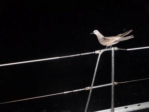 At last we're away again and, en route to Fernando do Noronha we get a night time hitchhiker
