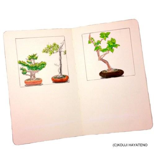 2014年ゴールデンウィーク作品 盆栽